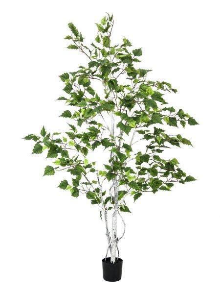 EUROPALMS Birkenbaum, Kunstpflanze, 150cm