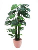 EUROPALMS Splitphilodendron, Kunstpflanze, 160cm