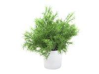 EUROPALMS Asparagus, Kunstpflanze, 24cm