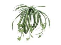 EUROPALMS Grünlilie, künstlich, 60cm