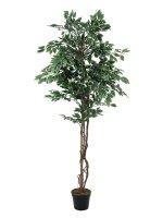 EUROPALMS Silberficus-Benjamini, Kunstpflanze,  180cm