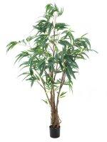 EUROPALMS Ficus Longifolia, dickstämmig,...