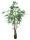 EUROPALMS Ficus Longifolia, dickstämmig, Kunstpflanze, 180cm