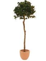 EUROPALMS Lorbeerkugelbaum, Kunstpflanze, 180cm