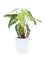 EUROPALMS Caladium, Kunstpflanze, grün-gelb, 35cm