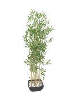 EUROPALMS Zierbambus in Dekoschale, künstlich, 150cm
