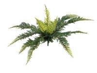 EUROPALMS Waldfarn, Kunstpflanze, 50cm