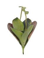 EUROPALMS Seerose (EVA), Kunstpflanze,geschlossen,...