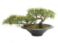 EUROPALMS Bonsai-Zeder, Kunstpflanze, 40cm