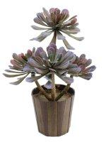 EUROPALMS Sukkulente Aeonium, Kunstpflanze, 30cm