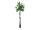 EUROPALMS Pachirabaum, Kunstpflanze, 160cm