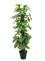 EUROPALMS Nephthytis, Kunstpflanze, 120cm