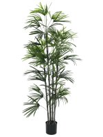 EUROPALMS Fächerpalm-Setzling, Kunstpflanze, 150cm
