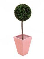 EUROPALMS Buchsbaum, künstlich, 110cm, D=60cm